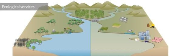 Catchment Model